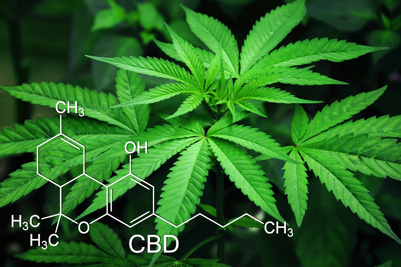 Cannabis light, come acquistare marijuana legalmente