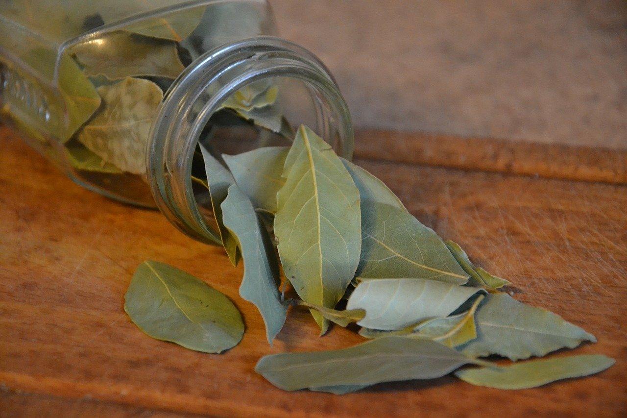 Liquore all'alloro: dalla Puglia al mondo