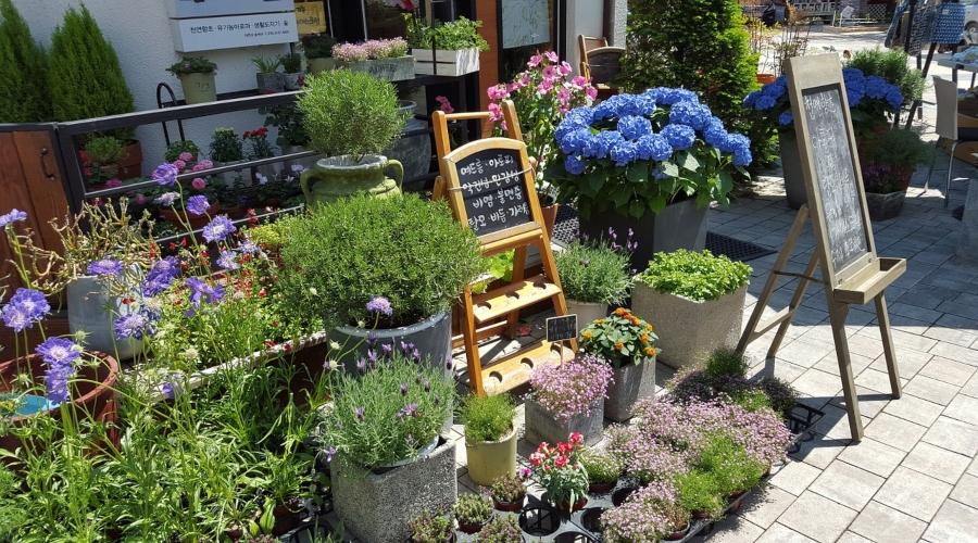 Negozio di fiori: i costi iniziali
