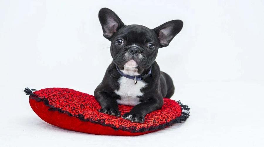 Aprire un pet shop: costi e franchising