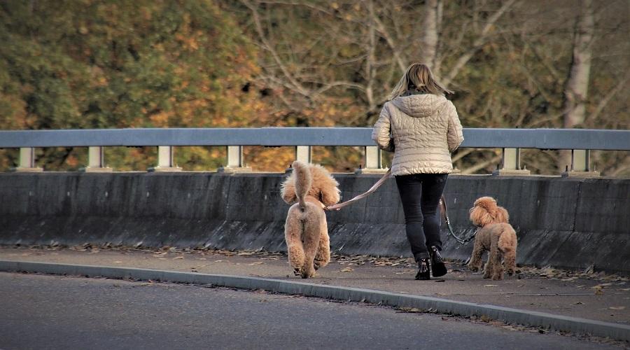 Come avviare un'attività di dog walking