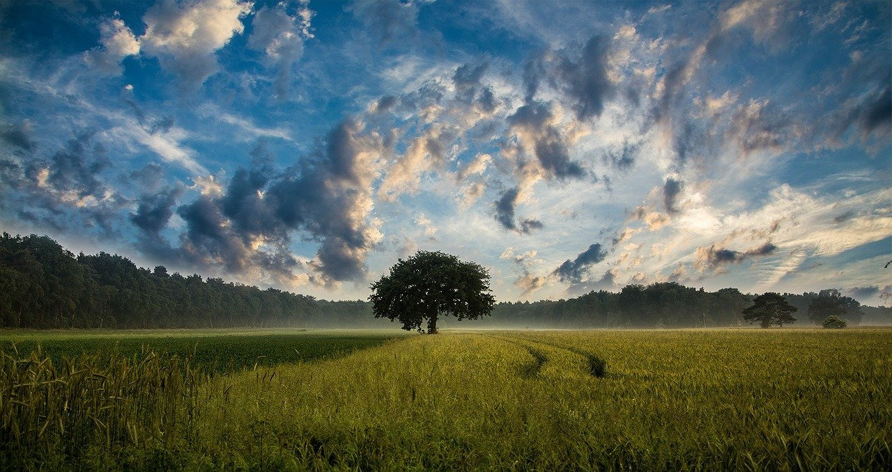 Agricoltura e innovazione 4.0: l'agri-digital di Amazon per supportare il business italiano