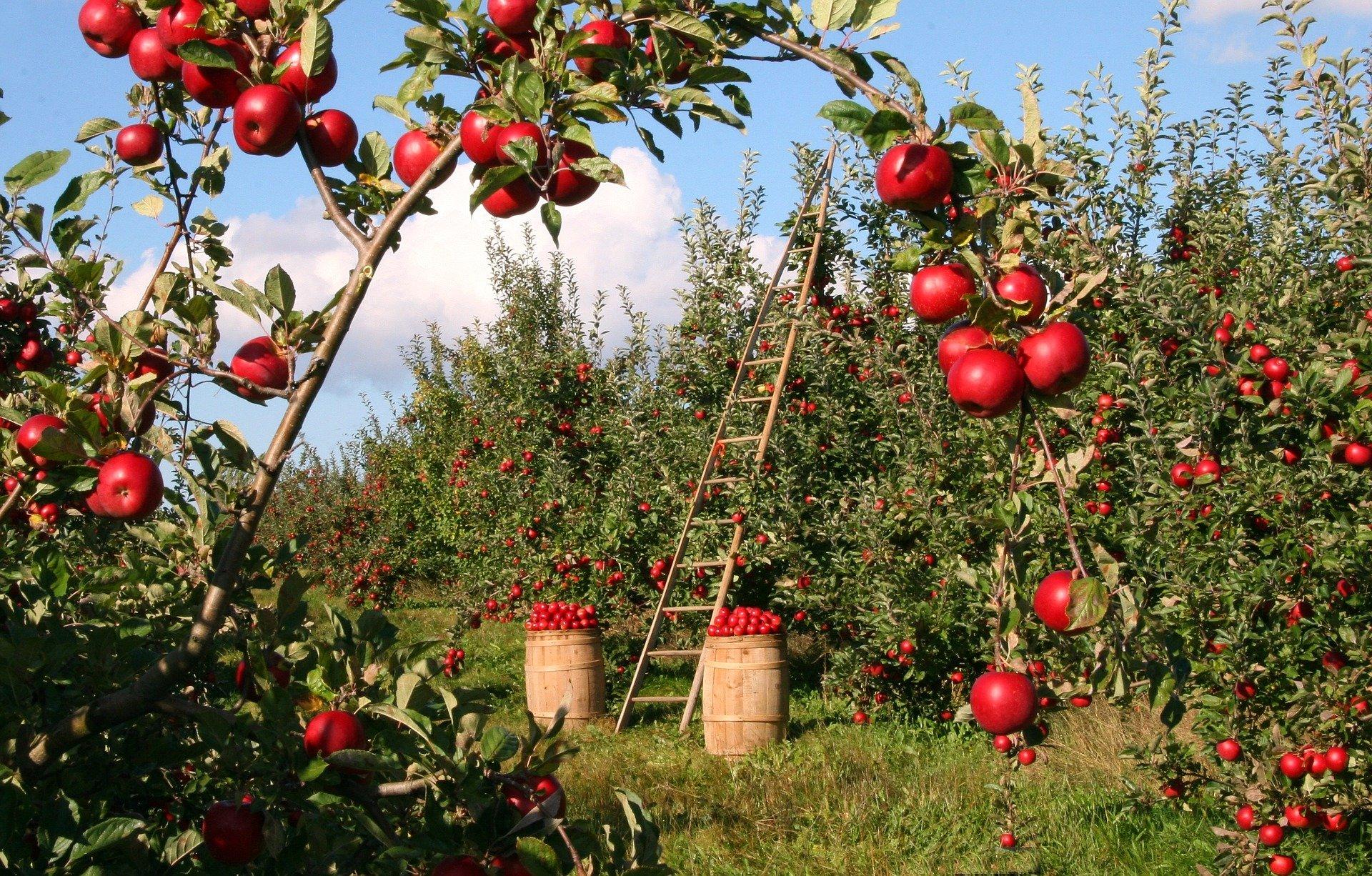 Come aprire un'azienda agricola sotto forma di società